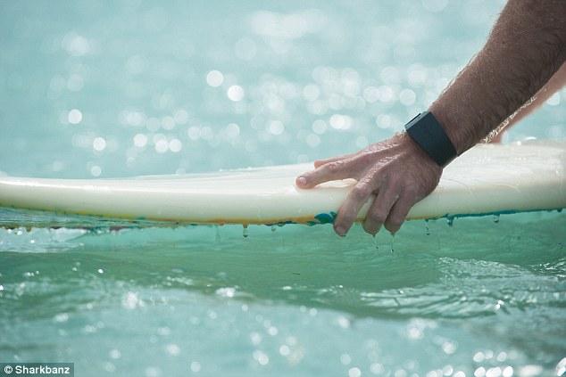 sharkbanz wear at water